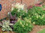Athyrium niponicum 'Pictum' (Japanese Painted Fern), Eucomis comosa 'Sparkling Burgundy' & Astilbe 'Ellie'